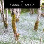 Web Book Cover 2